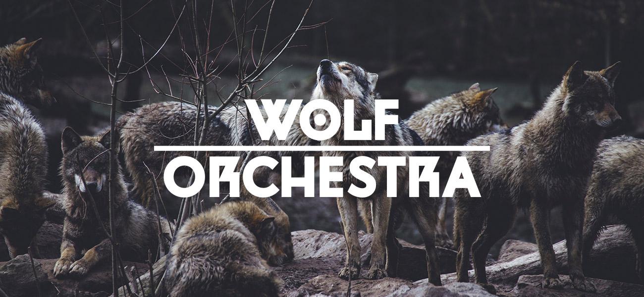 wolf orchestra band logo design birmingham